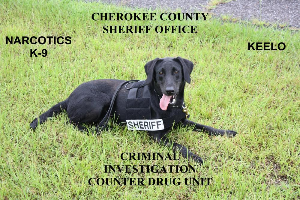 Narcotics K9 Keelo laying in the grass with the phrase Criminal Investigation Counter Drug Unit overlaying on the photo