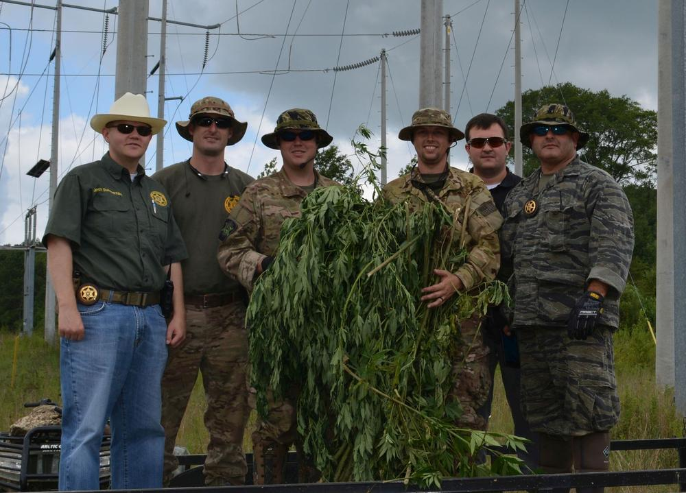 a marijuana plant seized with assistance from the Alabama Law Enforcement Agency